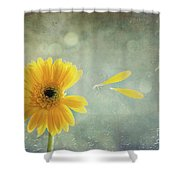 Gerbera With Raindrops Shower Curtain