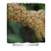 German Millet Shower Curtain