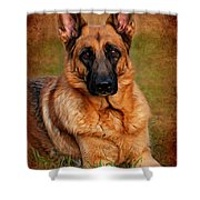 German Shepherd Dog Portrait  Shower Curtain by Angie Tirado