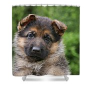 German Shepherd Puppy IIi Shower Curtain by Sandy Keeton