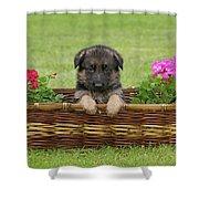 German Shepherd Puppy In Basket Shower Curtain by Sandy Keeton