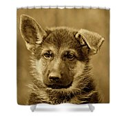 German Shepherd Puppy In Sepia Shower Curtain by Sandy Keeton