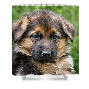German Shepherd Puppy Shower Curtain