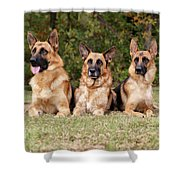 German Shepherds - Family Portrait Shower Curtain