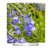 Germander Speedwell Shower Curtain