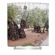 Gethsemane Shower Curtain