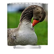 Getting Ready For Bed Shower Curtain