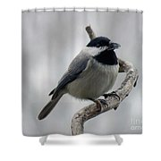 Getting Ready To Crack - Black-capped Chickadee Shower Curtain