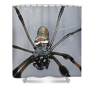 Getting To Know A Golden Orb Weaver Shower Curtain