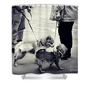 Getting To Know You - Puppies On Parade Shower Curtain