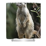 Getting Up Shower Curtain