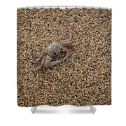 Ghost Crab Shower Curtain