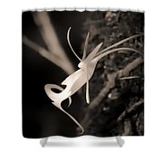 Ghost Orchid At First Light Shower Curtain