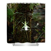 Ghost Orchid Of The Fakahatchee Strand Shower Curtain