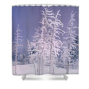 Ghost Trees Yellowstone National Park Shower Curtain