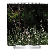 Ghost Wolf Shower Curtain by DigiArt Diaries by Vicky B Fuller