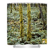 Ghostly Forest Shower Curtain