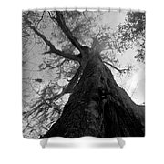 Ghostly Tree Shower Curtain