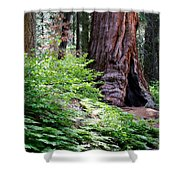 Giant Among The Forest Shower Curtain