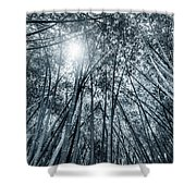 Giant Bamboo In Forest With Sunflare, Black And White Shower Curtain