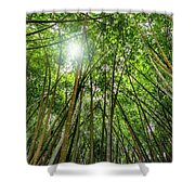 Giant Bamboo In Forest With Sunflare Shower Curtain