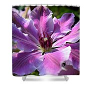 Giant Clematis Shower Curtain