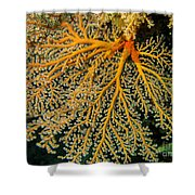 Giant Coral Polyp Shower Curtain