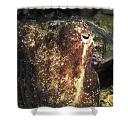 Giant Cuttlefish Camouflage Shower Curtain