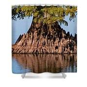 Giant Cypress Tree In Reelfoot Lake Shower Curtain