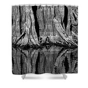 Giant Cypress Tree Trunk And Reflection 2 Shower Curtain