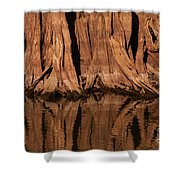 Giant Cypress Tree Trunk And Reflection Shower Curtain
