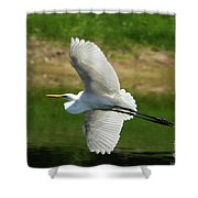 Giant Egret Grace Shower Curtain