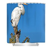 Giant Egret Shower Curtain