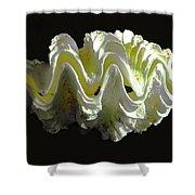 Giant Frilled Clam Seashell Tridacna Squamosa Shower Curtain