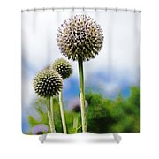 Giant Globe Thistle Shower Curtain