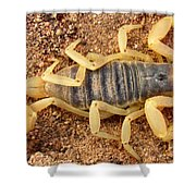 Giant Hairy Scorpion Shower Curtain