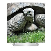 Giant Land Turtle Shower Curtain