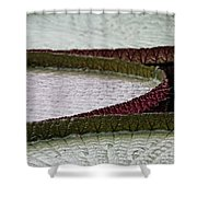 Giant Lilly Pads Shower Curtain