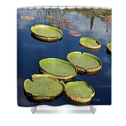 Giant Lily Pads Shower Curtain