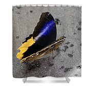Giant Owl Butterfly Shower Curtain