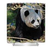 Giant Panda Bear Creeping Under A Tree Branch Shower Curtain