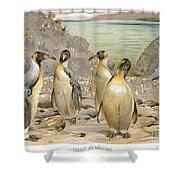 Giant Penguins, C1900 Shower Curtain