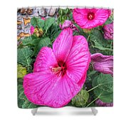 Giant Pink Hibiscus Shower Curtain