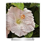 Giant Pink Hibiscus I Shower Curtain