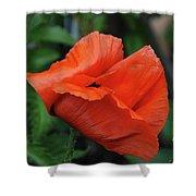 Giant Poppy-2 Shower Curtain
