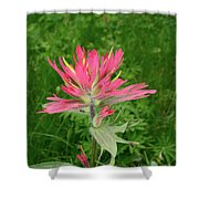 Giant Red Paintbrush Shower Curtain
