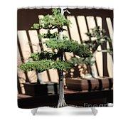 Giant Redwood Bonsai  Shower Curtain