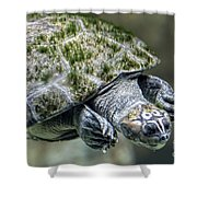 Giant River Turtle Shower Curtain