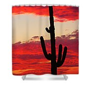 Giant Saguaro  Southwest Desert Sunset Shower Curtain