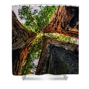 Giant Sequoia Sunset Shower Curtain